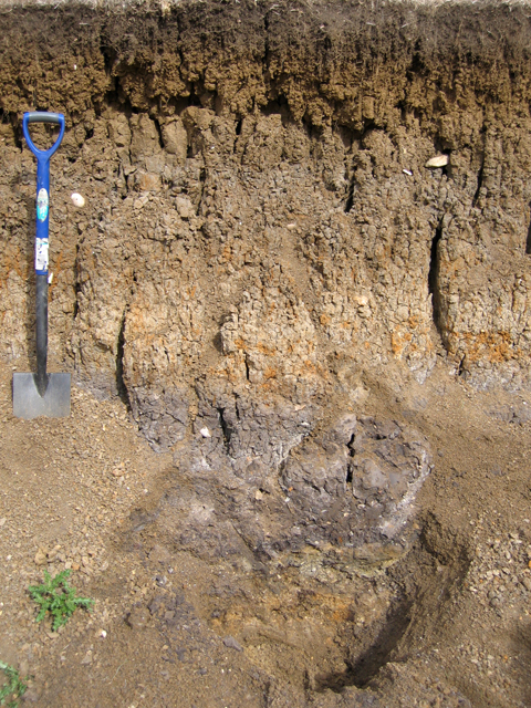 soil profile in river alluvium